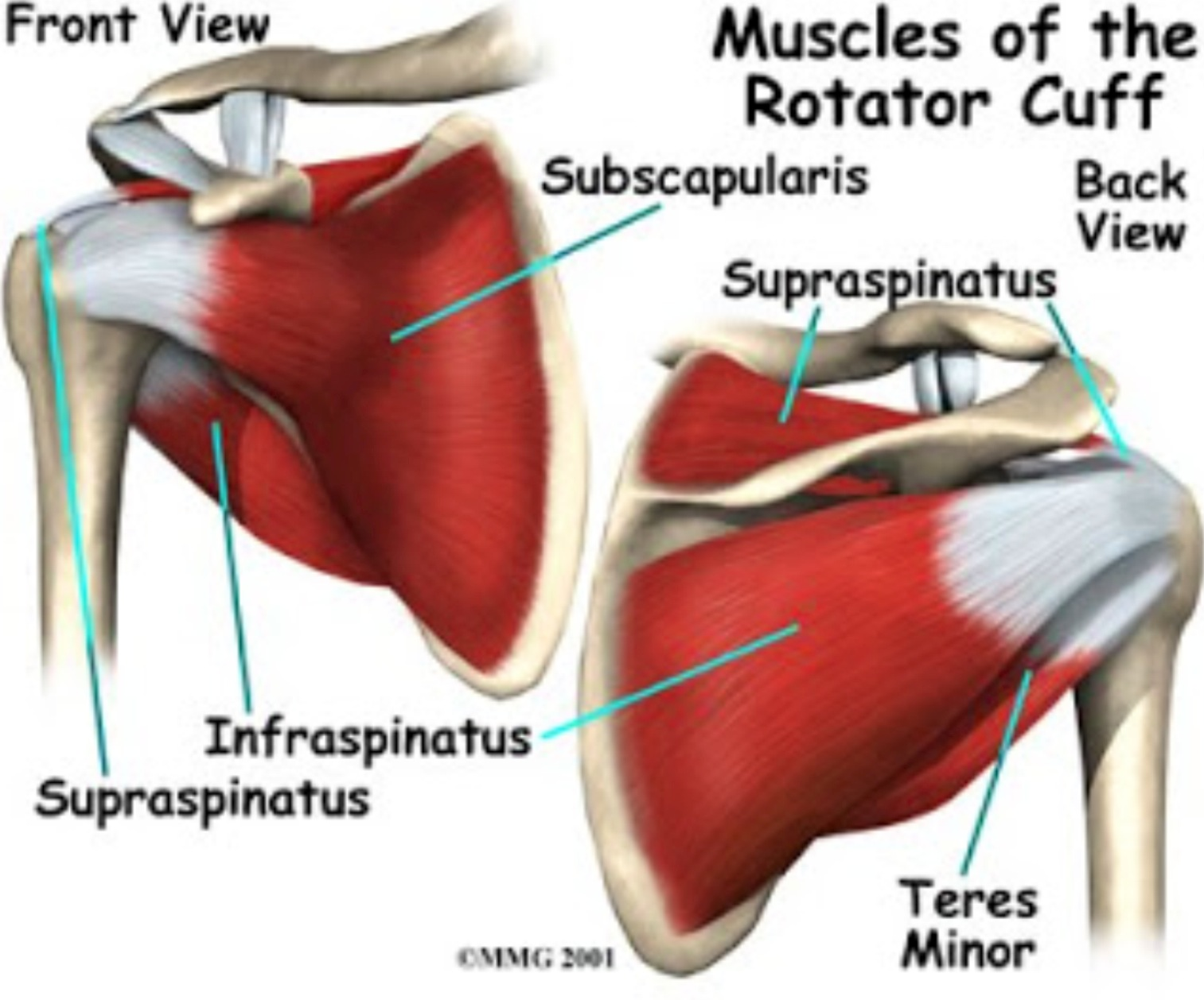 Rotator Cuff Tears | Physical Therapist Tips | FREE phone Consult