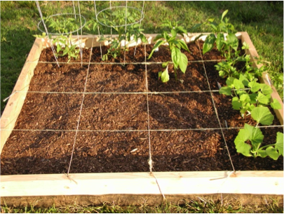 Square Foot Gardening - Blog Post