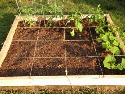 Square Foot Gardening - Blog Post