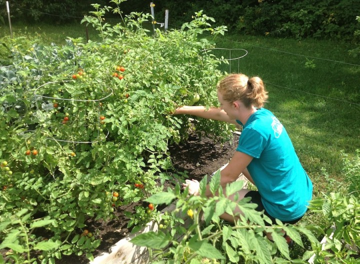 Prevent Pain While Gardening