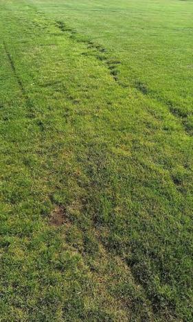 Old Football field - Tartan High School