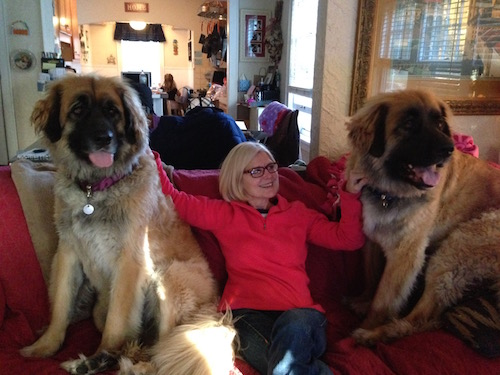 Peg and Leonbergers